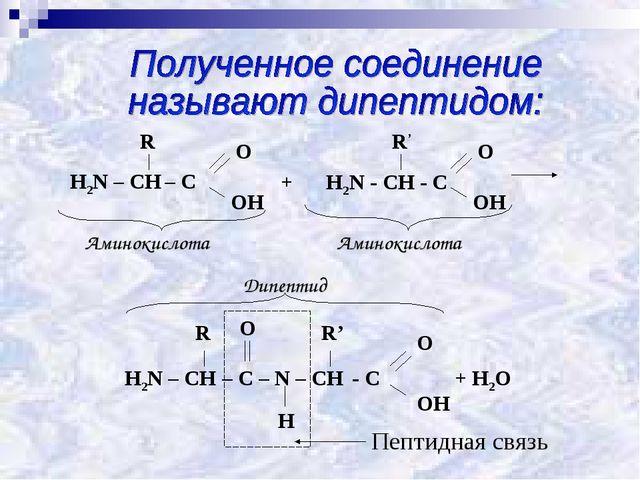 Пептидная связь Аминокислота Аминокислота Дипептид +