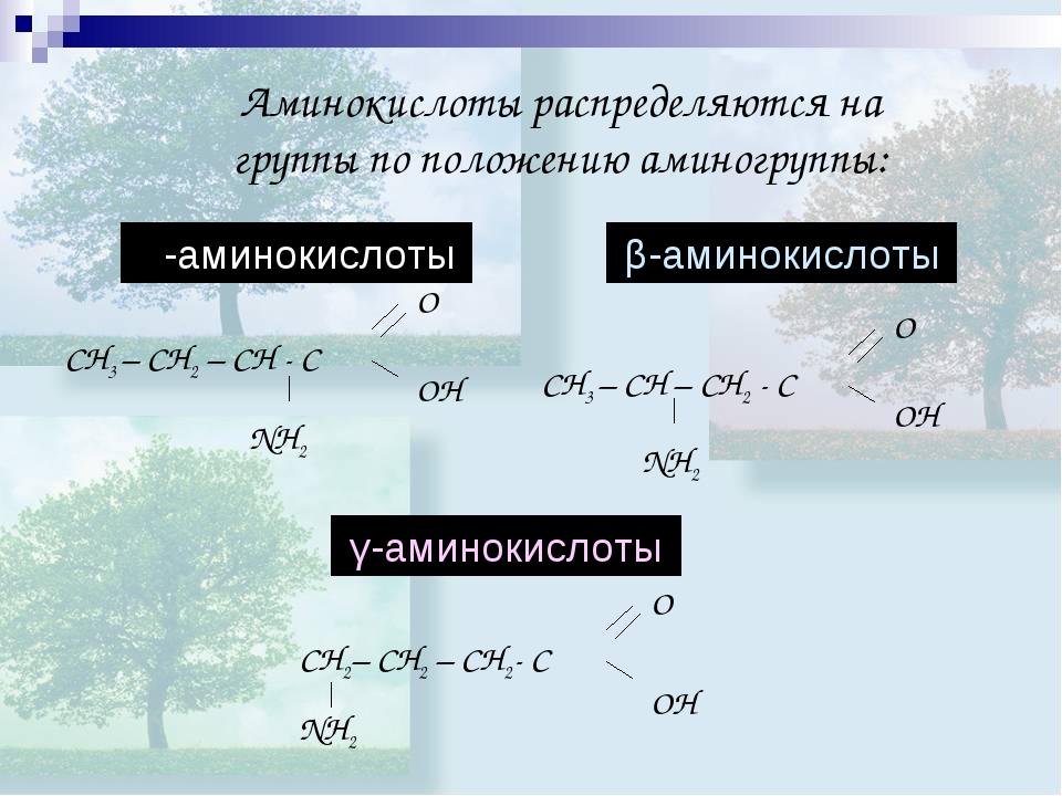 Аминокислоты распределяются на группы по положению аминогруппы: γ-аминокислот...