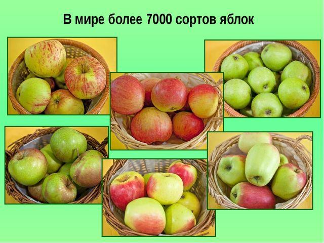 В мире более 7000 сортов яблок