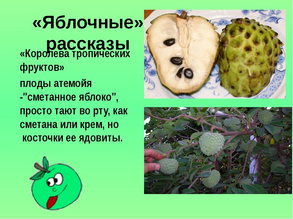 """«Яблочные» рассказы «Королева тропических фруктов» плодыатемойя -""""сметанное..."""