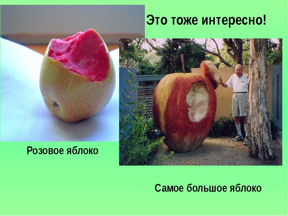 Это тоже интересно! The biggest apple The biggest apple Розовое яблоко Самое...