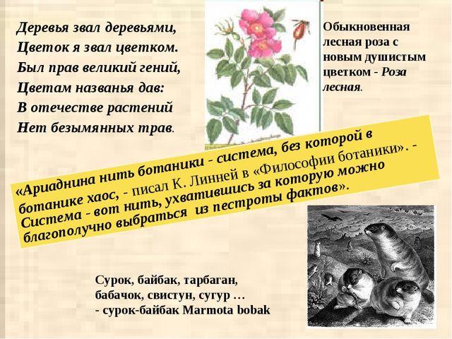 Деревья звал деревьями, Цветок я звал цветком. Был прав великий гений, Цветам...