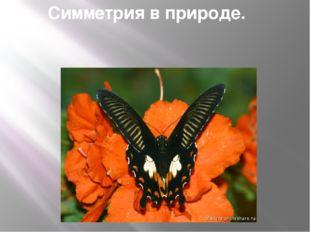 Симметрия в природе.