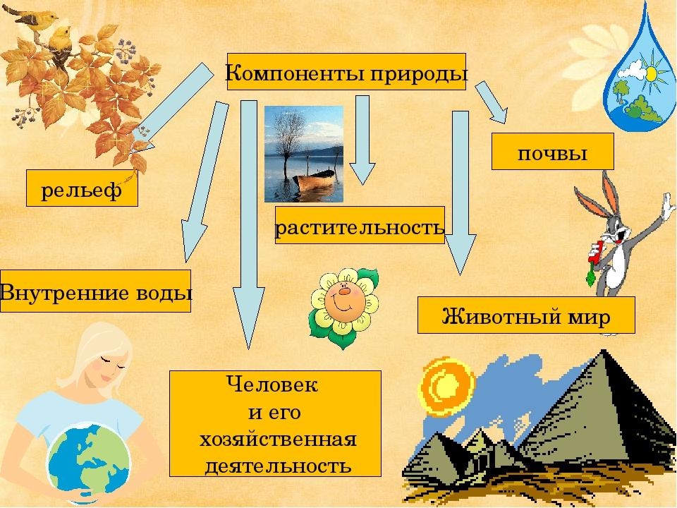 Компоненты природы Животный мир рельеф почвы растительность Внутренние воды Ч...