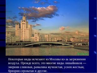 Некоторые виды исчезают из Москвы из-за загрязнения воздуха. Прежде всего, эт