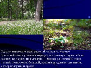 Однако, некоторые виды растений оказались хорошо приспособлены к условиям гор