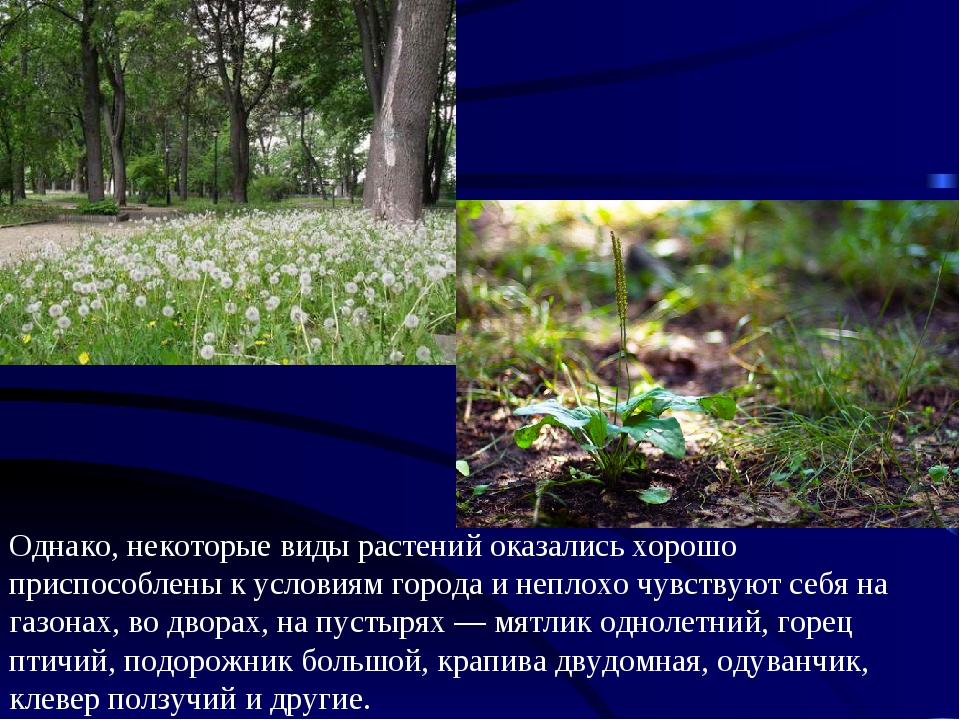 Однако, некоторые виды растений оказались хорошо приспособлены к условиям гор...