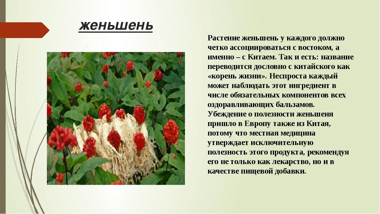 женьшень Растение женьшень у каждого должно четко ассоциироваться с востоком,...