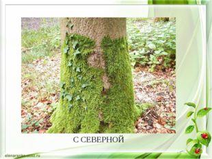 С СЕВЕРНОЙ