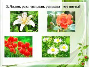 3. Лилия, роза, тюльпан, ромашка – это цветы?