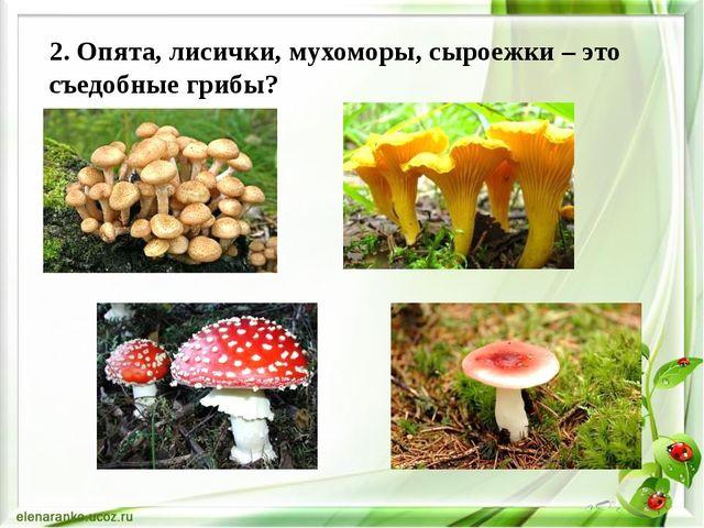 2. Опята, лисички, мухоморы, сыроежки – это съедобные грибы?
