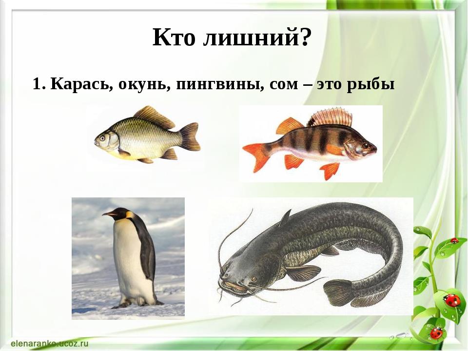 Кто лишний? 1. Карась, окунь, пингвины, сом – это рыбы