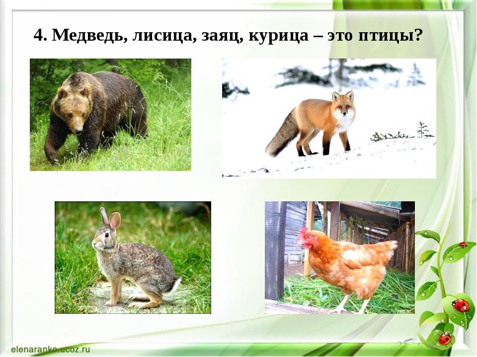 4. Медведь, лисица, заяц, курица – это птицы?