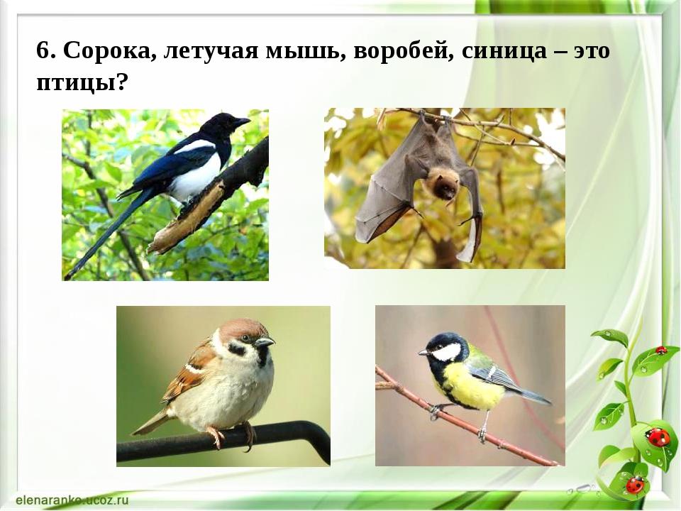 6. Сорока, летучая мышь, воробей, синица – это птицы?