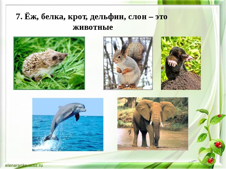 7. Ёж, белка, крот, дельфин, слон – это животные