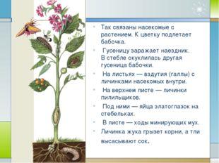 Так связаны насекомые с растением. К цветку подлетает бабочка. Гусеницу зара