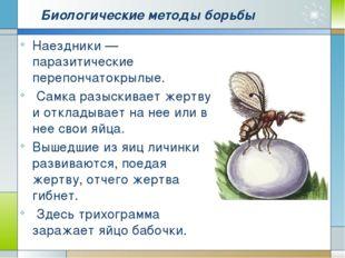 Биологические методы борьбы Наездники — паразитические перепончатокрылые. Сам