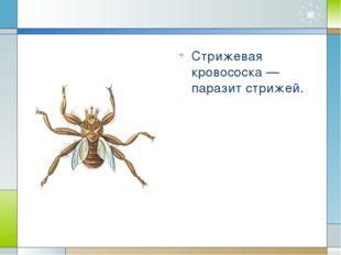 Вши Вши – мелкие бескрылые насекомые с уплощенным телом, небольшой головой, к
