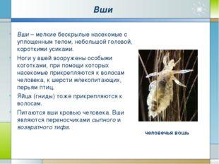 Блохи. Это бескрылые насекомые длиной до 5 мм. Их гладкое тело сплющено с бок