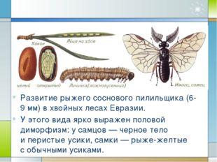 Развитие рыжего соснового пилильщика (6-9мм) вхвойных лесах Евразии. Уэто