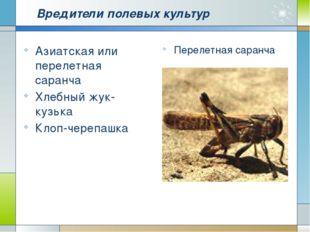 Вредители полевых культур Азиатская или перелетная саранча Хлебный жук-кузька