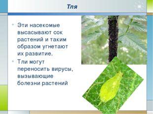 Тля Эти насекомые высасывают сок растений и таким образом угнетают их развити