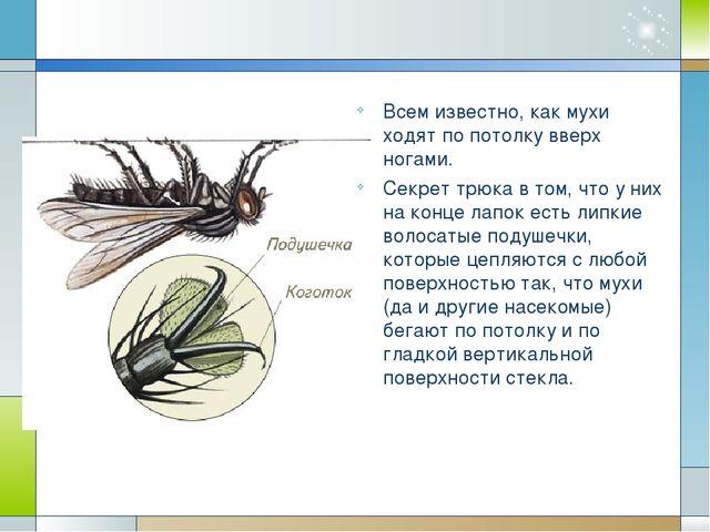Всем известно, как мухи ходят по потолку вверх ногами. Секрет трюка в том, ч...