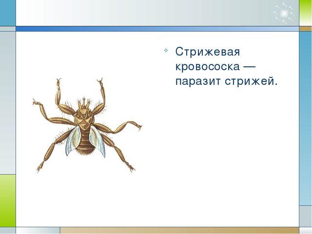 Вши Вши – мелкие бескрылые насекомые с уплощенным телом, небольшой головой, к...