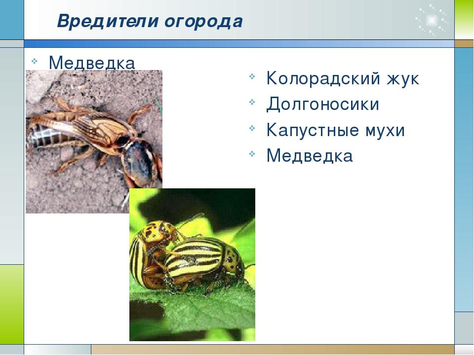 Вредители огорода Медведка Колорадский жук Долгоносики Капустные мухи Медведка