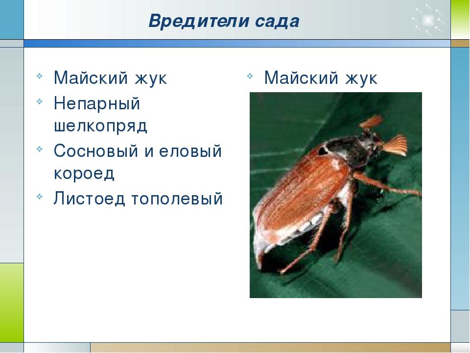 План-конспект урока насекомые вредители по программе пономарёвой 7 кл