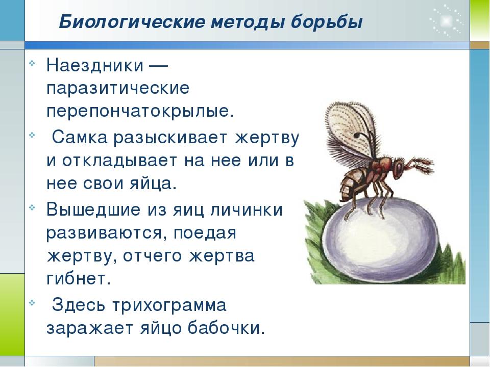 Биологические методы борьбы Наездники — паразитические перепончатокрылые. Сам...