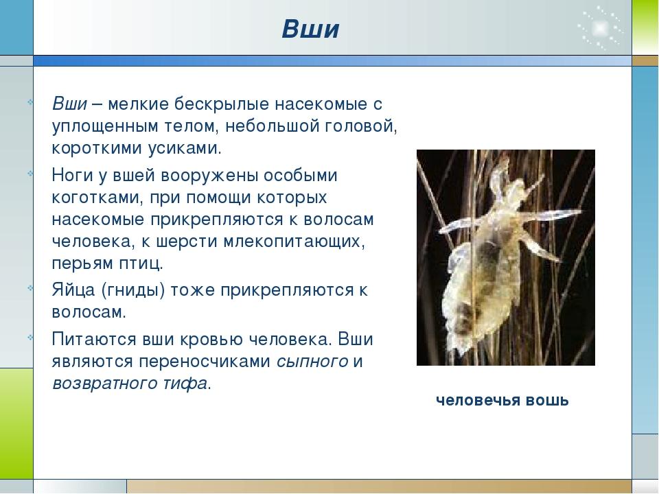 Блохи. Это бескрылые насекомые длиной до 5 мм. Их гладкое тело сплющено с бок...