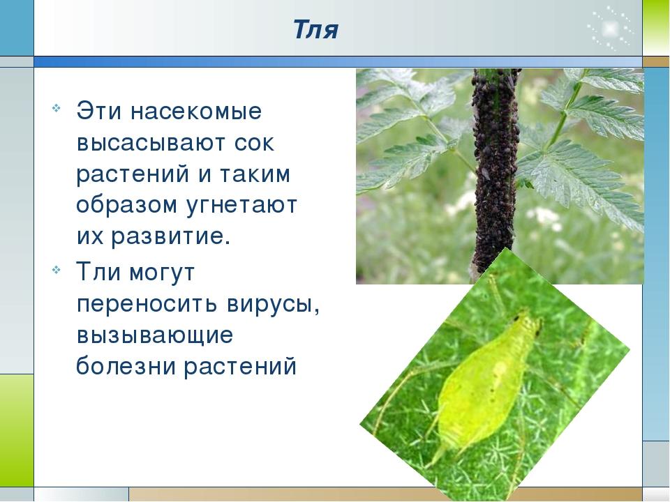 Тля Эти насекомые высасывают сок растений и таким образом угнетают их развити...