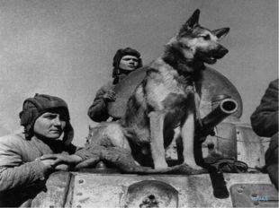 Собака, которая, обнаружила при разминировании в последний год войны 7468 мин
