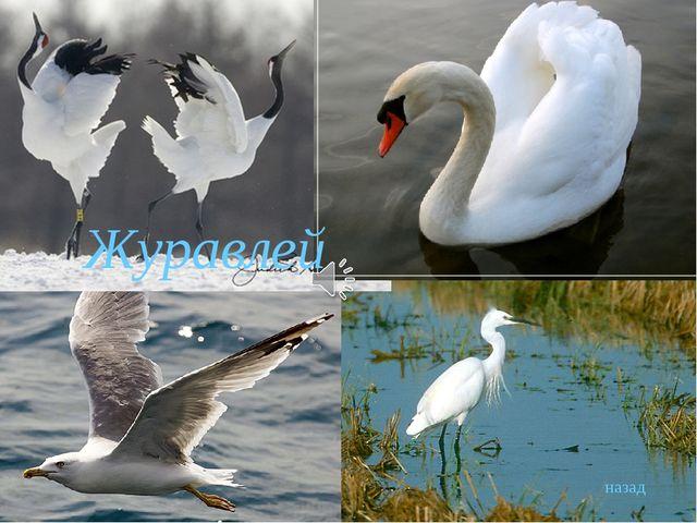 Песни войны 30 В каких птиц, по мнению автора песни, превращаются убитые солд...