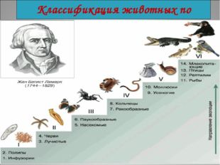 Классификация животных по Ламарку