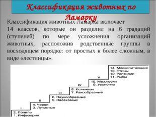 Классификация животных по Ламарку Классификация животных Ламарка включает 14