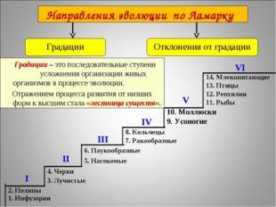 14. Млекопитающие 13. Птицы 12. Рептилии 11. Рыбы I II III IV VI V 2. Полипы