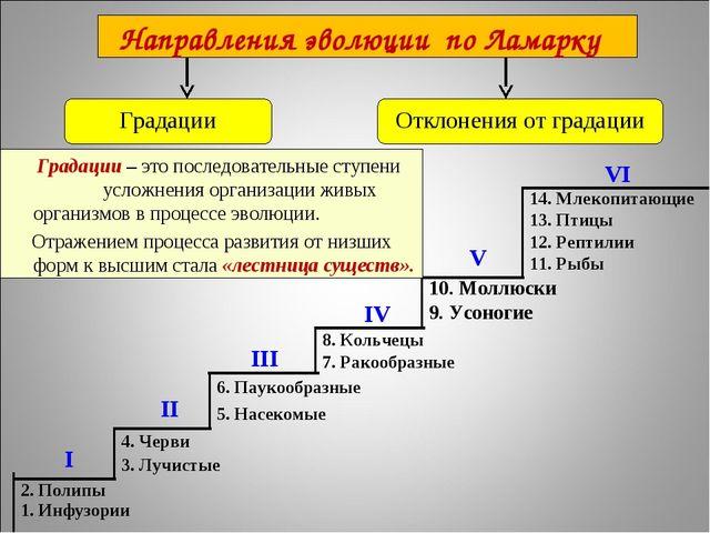14. Млекопитающие 13. Птицы 12. Рептилии 11. Рыбы I II III IV VI V 2. Полипы...