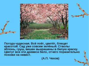 Погода чудесная. Всё поёт, цветёт, блещет красотой. Сад уже совсем зелёный.