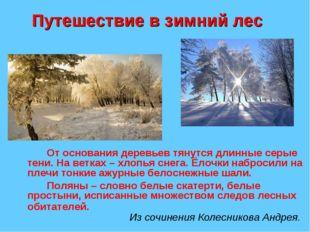 Путешествие в зимний лес От основания деревьев тянутся длинные серые тени.