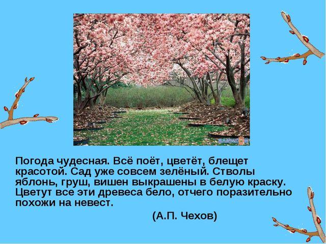 Погода чудесная. Всё поёт, цветёт, блещет красотой. Сад уже совсем зелёный....