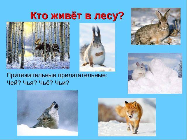 Кто живёт в лесу? Притяжательные прилагательные: Чей? Чья? Чьё? Чьи?