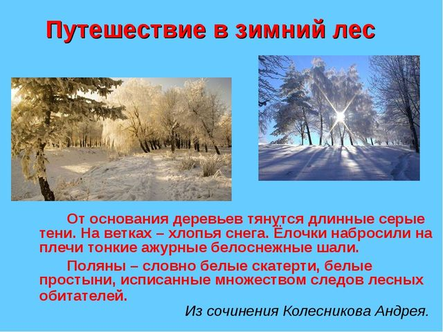 Путешествие в зимний лес От основания деревьев тянутся длинные серые тени....