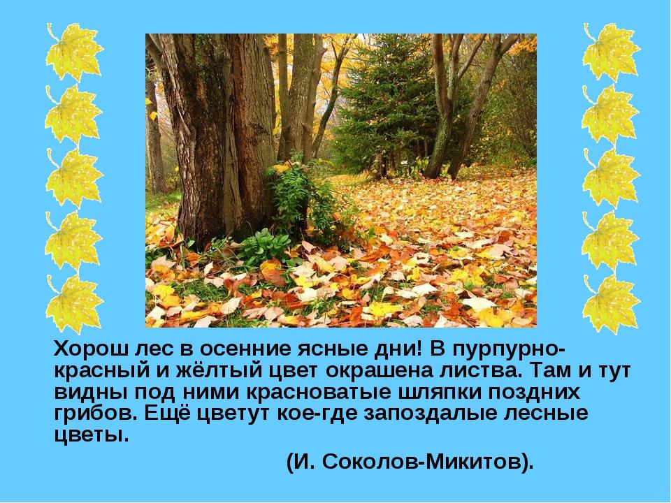 Хорош лес в осенние ясные дни! В пурпурно-красный и жёлтый цвет окрашена лис...