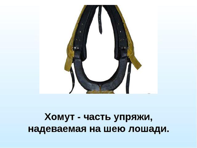 Хомут - часть упряжи, надеваемая на шею лошади.