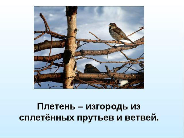 Плетень – изгородь из сплетённых прутьев и ветвей.