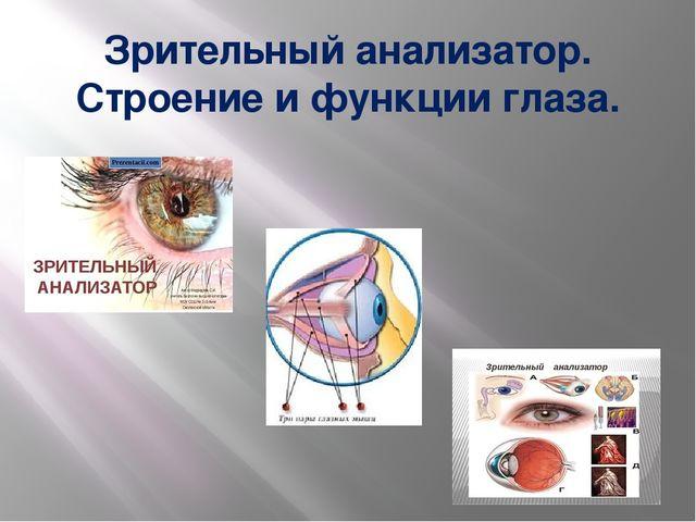 Зрительный анализатор. Строение и функции глаза.