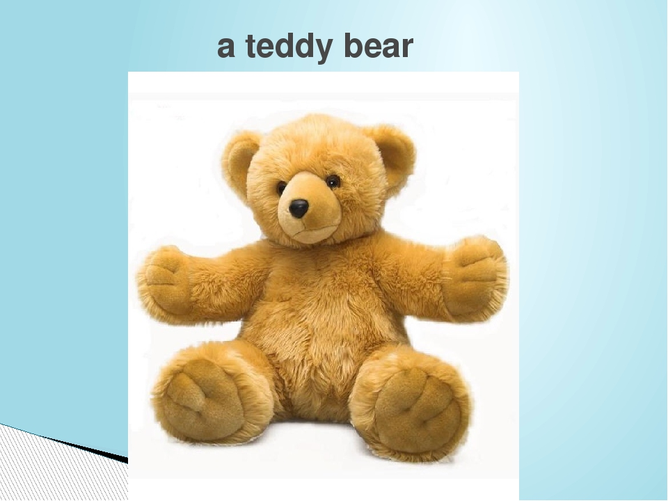 a teddy bear