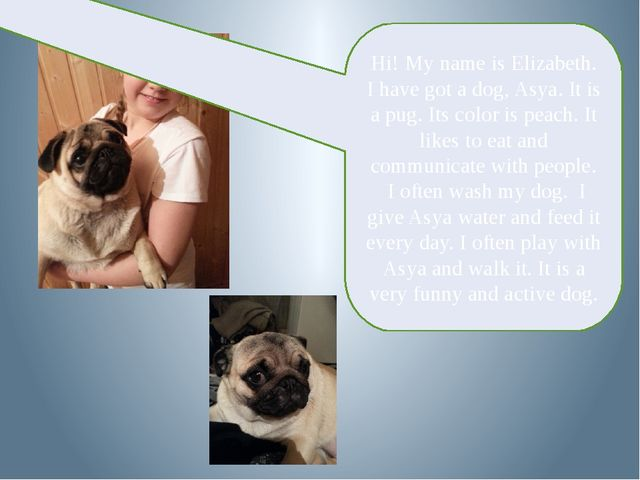 Hi! My name is Elizabeth. I have got a dog, Asya. It is a pug. Its color is...